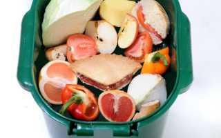Способы утилизации продуктов питания с истекшим сроком годности