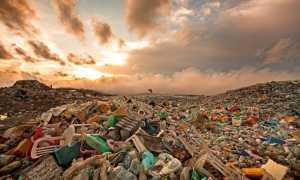 Сколько лет разлагается мусор: пластик, дерево, металл, строительные отходы и тд
