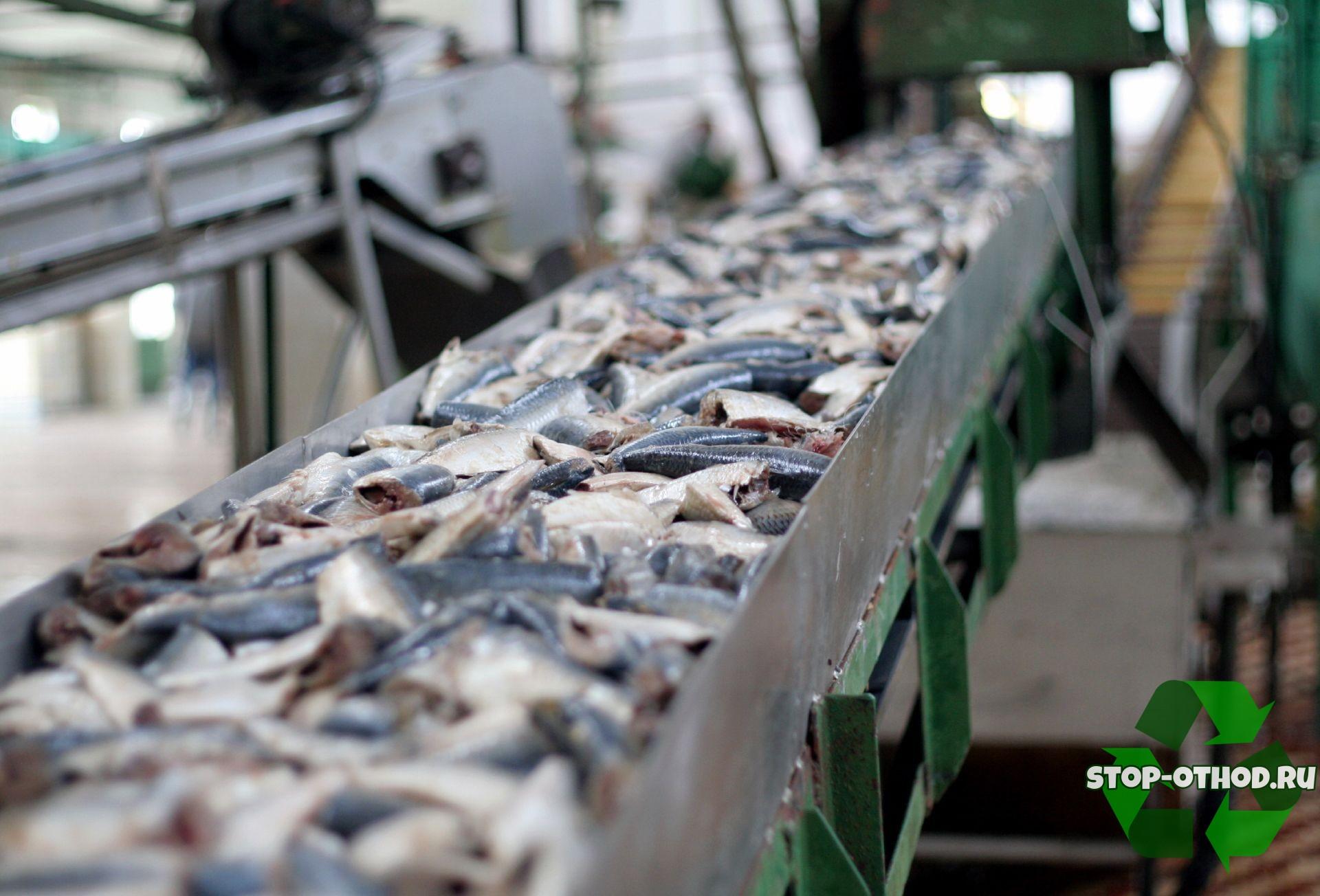использование рыбных отходов