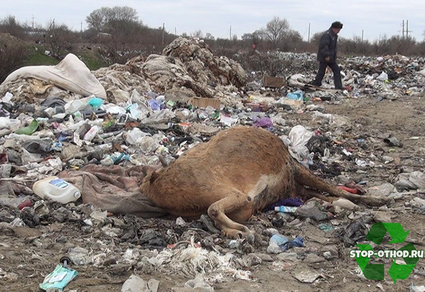 неправильная Утилизация биологических отходов
