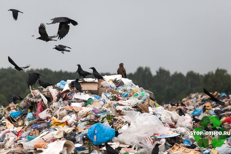 Экологическая проблема мусора